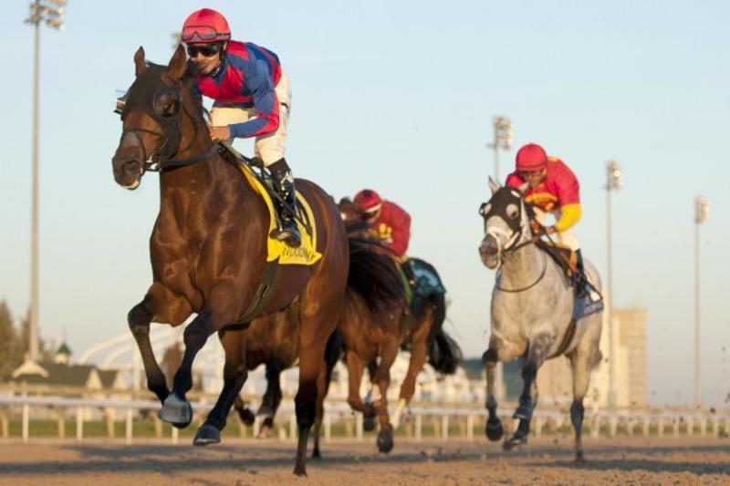 Toronto Ont.November 6, 2016.Woodbine Racetrack.Autumn Stakes.Are You Kidding Me Jockey Alan Garcia.WEG/michael burns photo