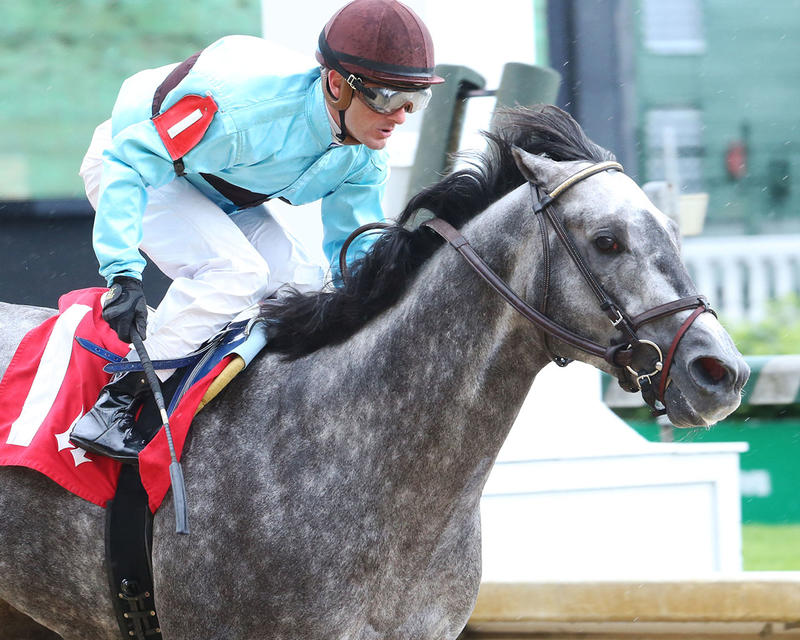 BIRD-SONG---The-Alysheba-Gr-ll---14th-Running---05-05-17---R06---CD---Tight-Fin-1