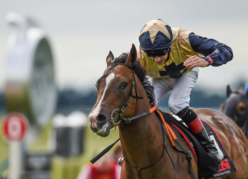 Beckford Railway Stakes2 (Sportsfile)