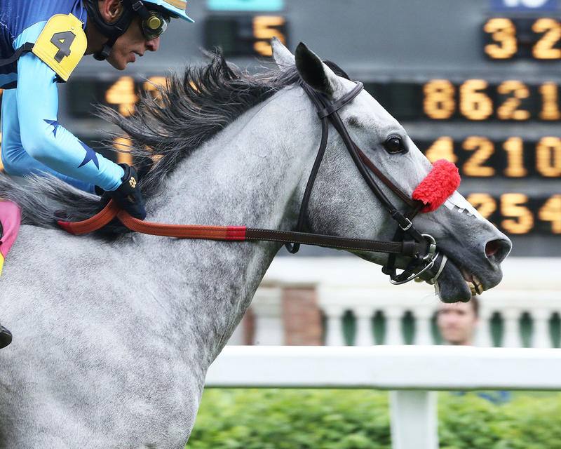 A-LITTLE-BIT-OF-ME---The-Unbridled-Sydney---9th-Running---05-02-19---R10---CD---Finish-03 (1)