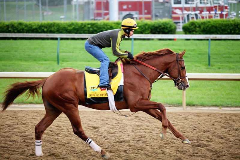 Shackleford gallops down the backstretch, chestnut horse with white blaze