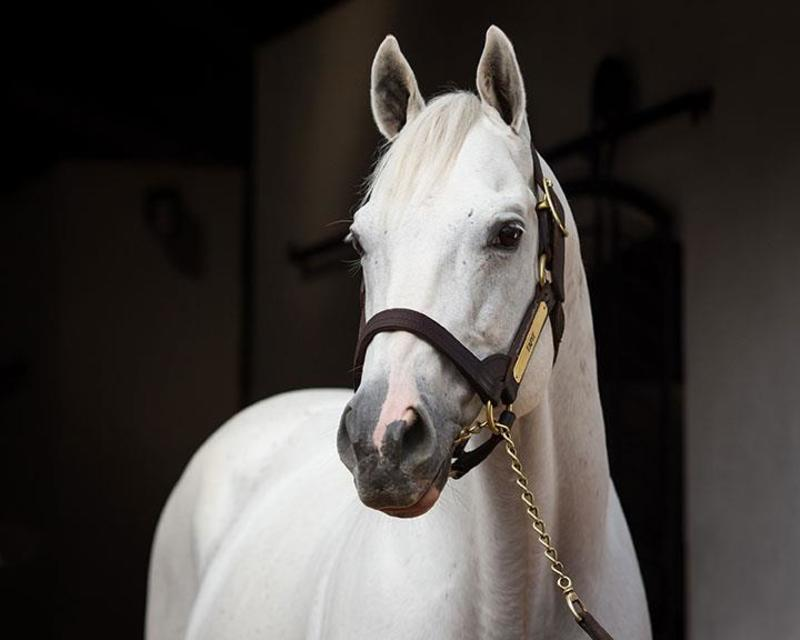 Tapit (Gainesway Farm)2