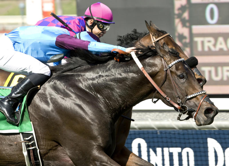 Bolo and jockey Flavien Prat, outside, overtake Obviously (Mike Smith), inside, to win the Grade II, $200,000 Arcadia Stakes, Saturday, February 13, 2016 at Santa Anita Park, Arcadia CA.